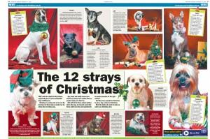 12 strays