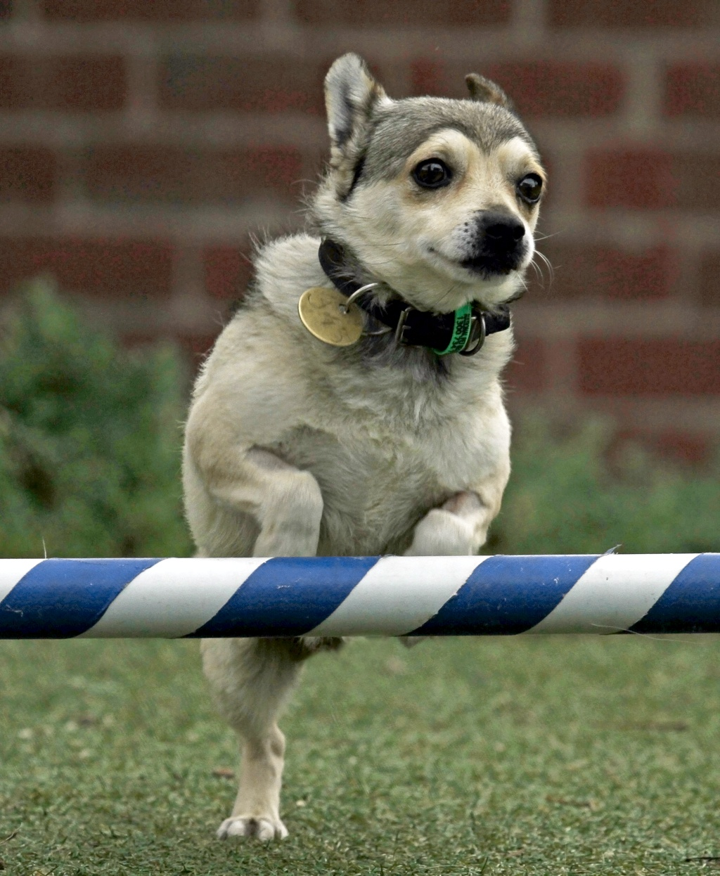 Astro Boy - Major Milestones - The Lost Dogs' Home