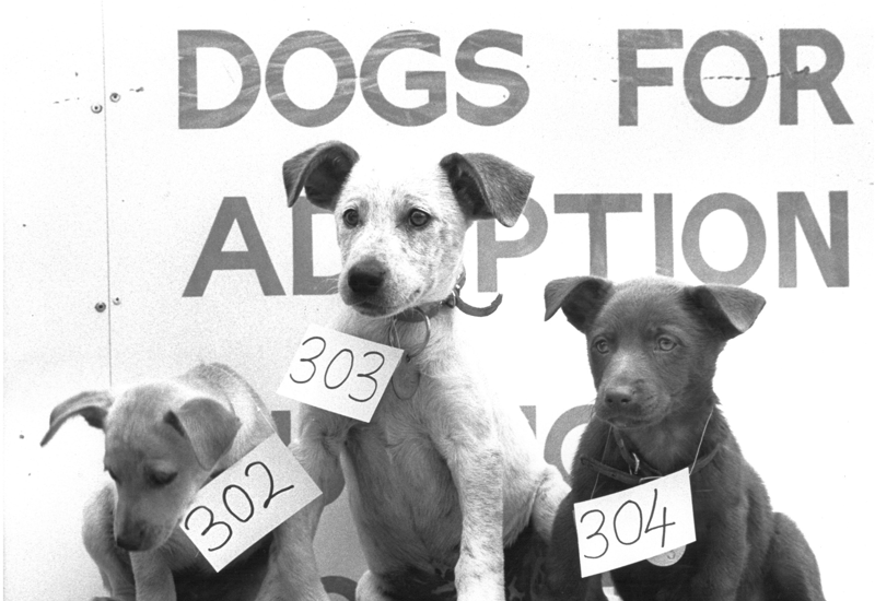 'Dogs for Adoption' The Lost Dogs' Home