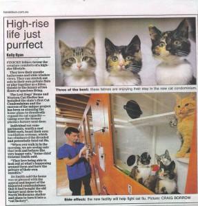 Cat Condos 5 June 09