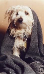 blanket appeal dog copy Newspaper
